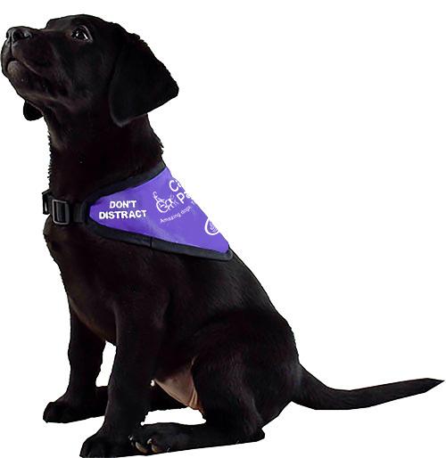 Canine Partner Dog