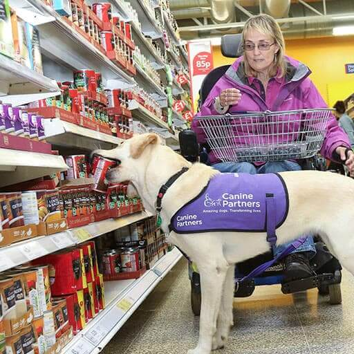 Canine Partners dog helpling with shopping