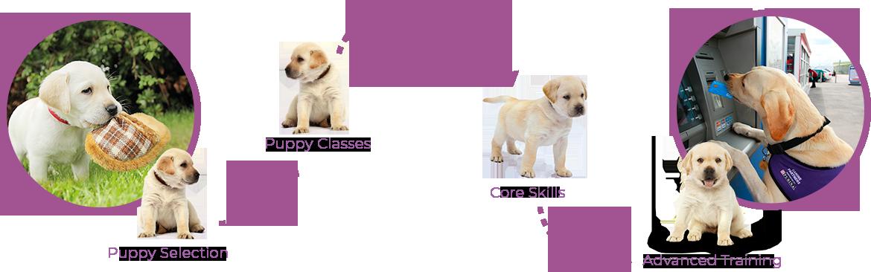 Puppy timeline